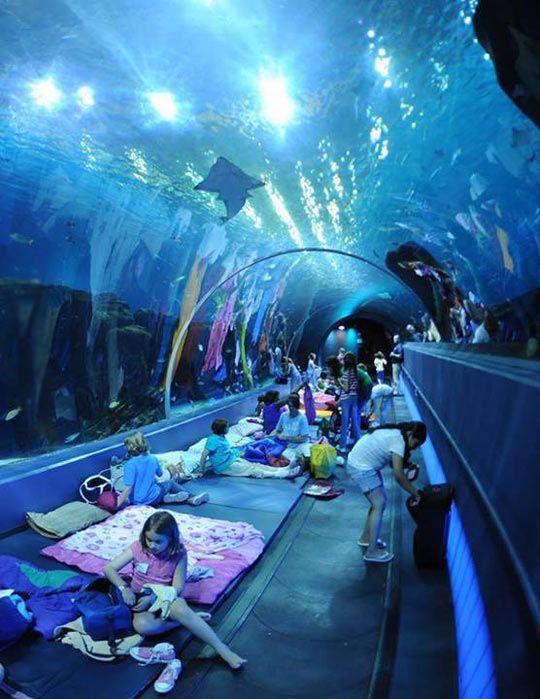 Festa do pijama no SeaWorld