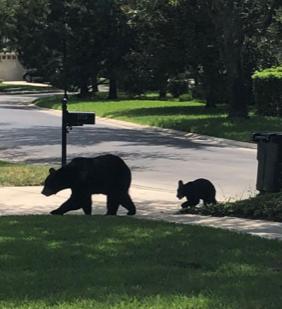 Um urso no meu quintal